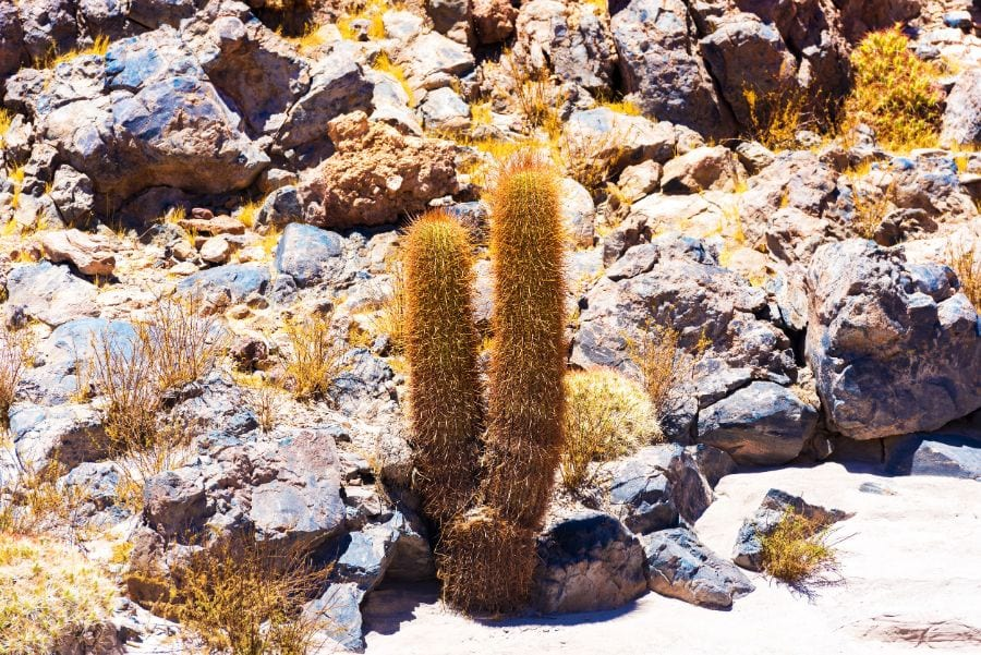 What to Do About Your Cactus Turning Yellow or Brown