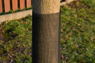 Protective Mesh Around Tree to Prevent Deer Damage