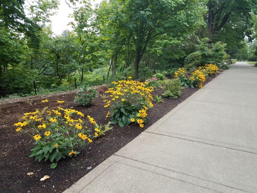 Flowerbed With Mulch Next to Sidewalk