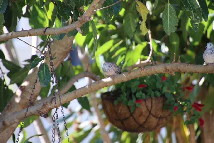 8 Great Ways to Keep Birds Out of Your Hanging Baskets
