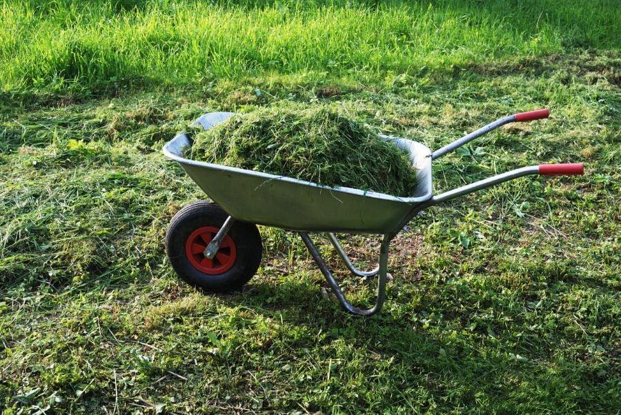 Fresh Grass Clippings in Wheelbarrow